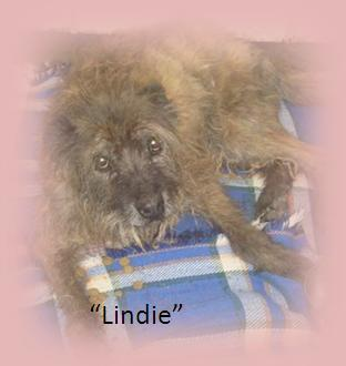 lindie--in-loving-memory